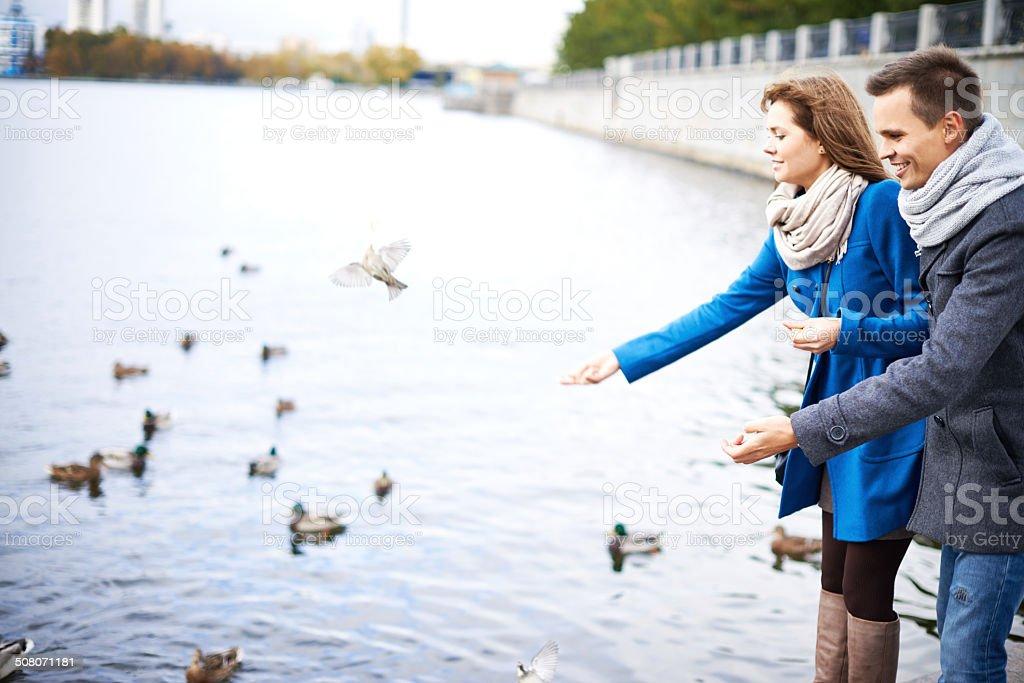 Feeding water birds stock photo