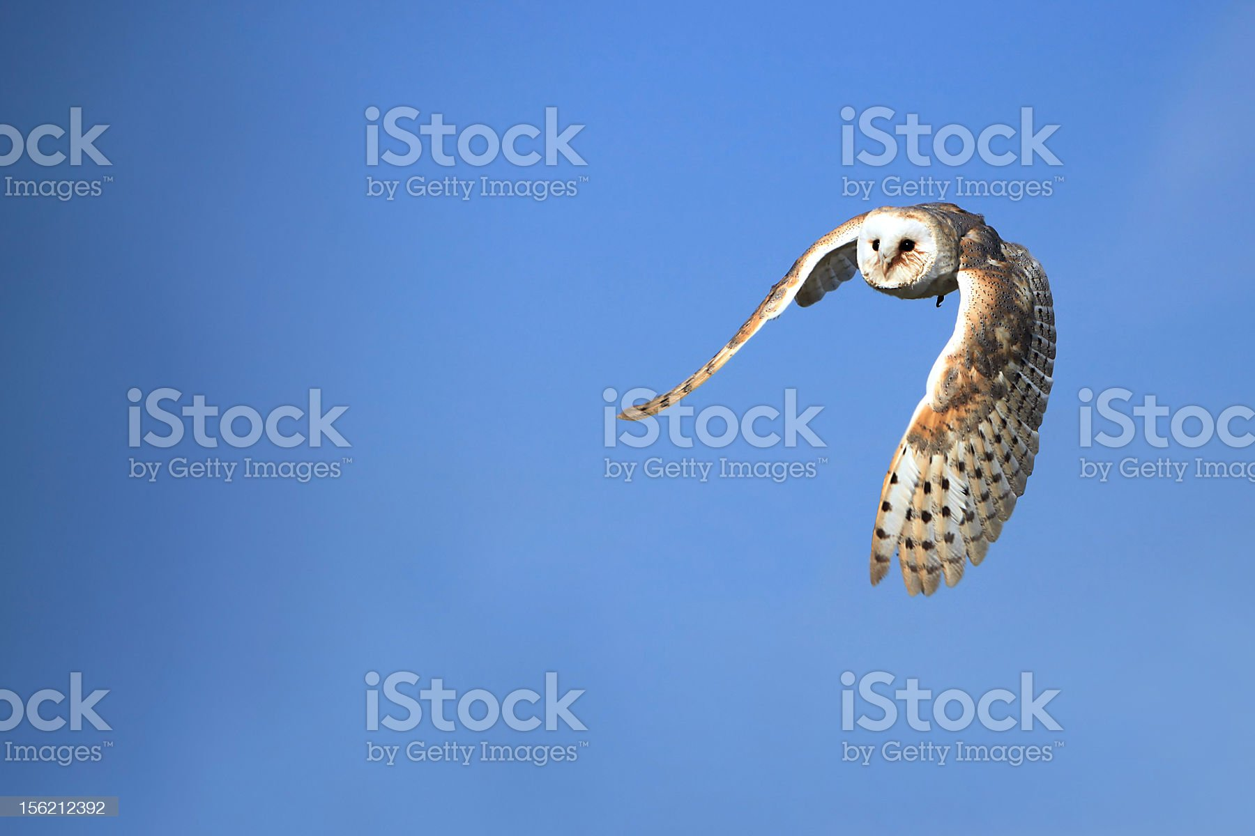 Feeling Free royalty-free stock photo