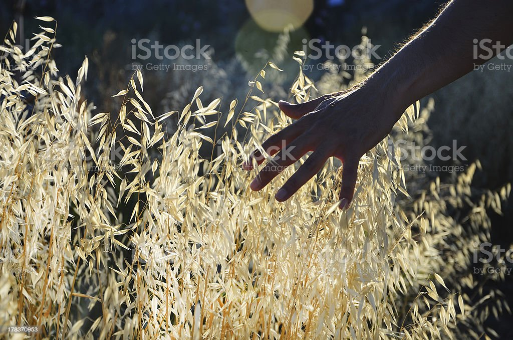 Feeling of naturalness stock photo