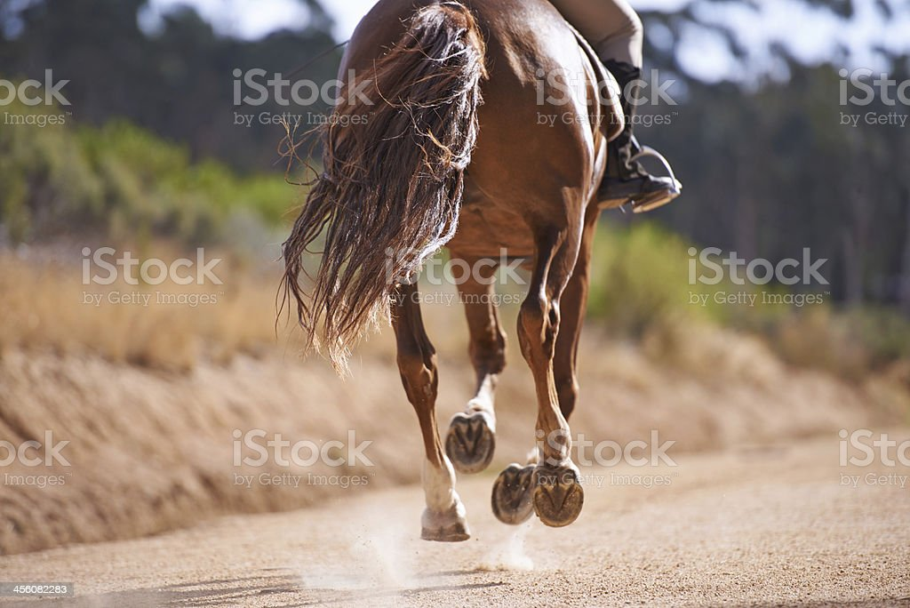 Feeling the freedom of a good gallop stock photo