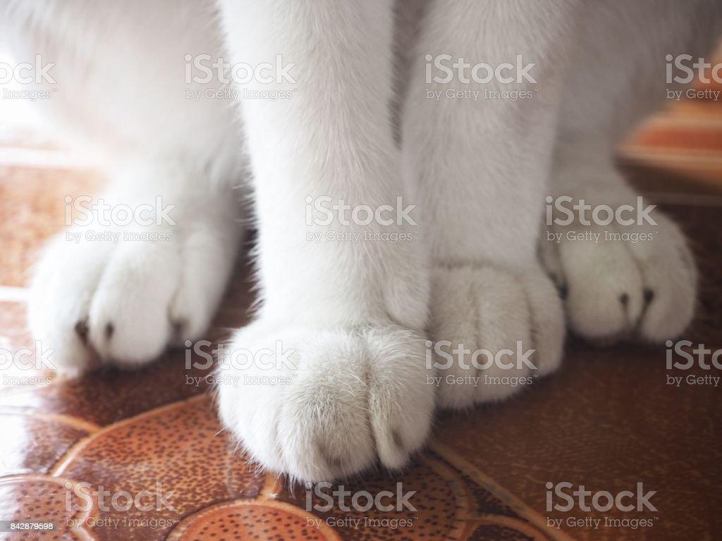 Feet of cat stock photo