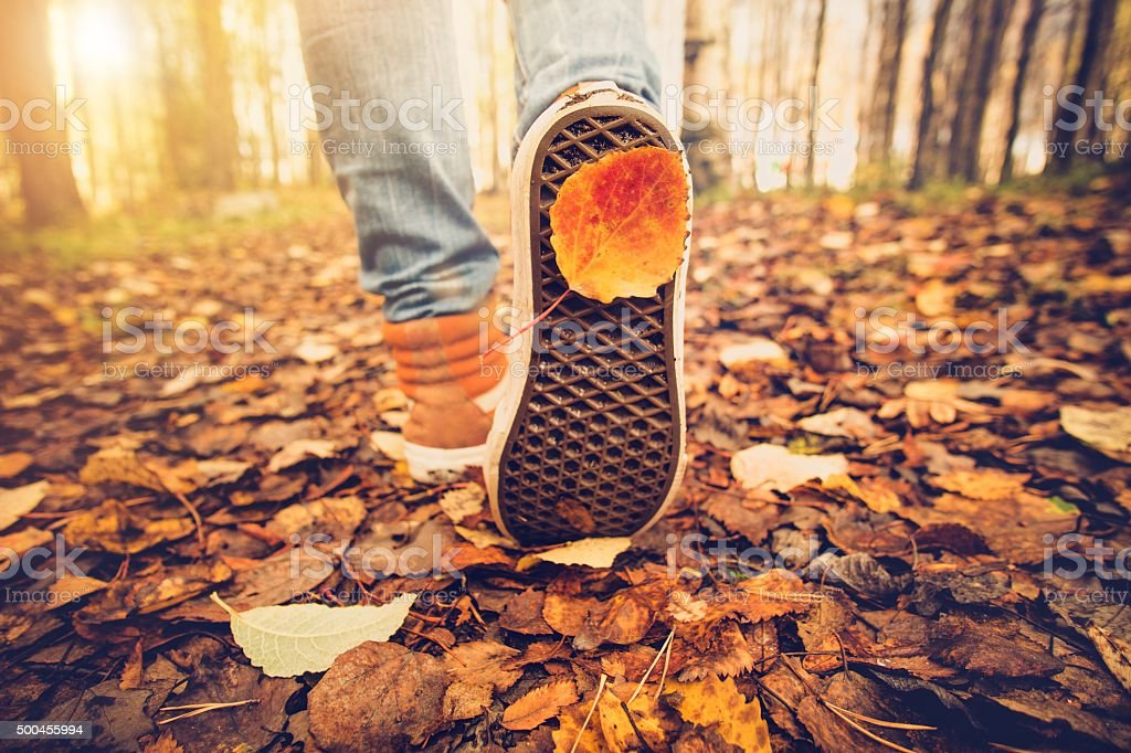 Feet sneakers walking on fall leaves Outdoor Autumn season stock photo