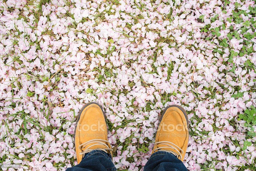 POV of feet stood amongst cherry blossom petals stock photo