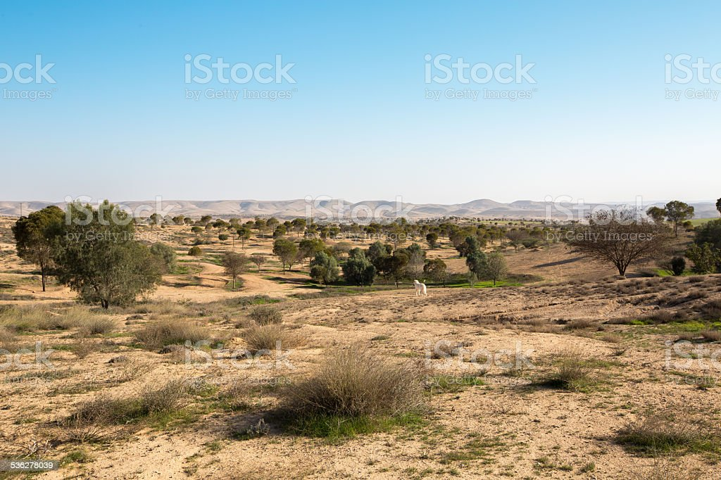 Feild near Metar, a comunity village northen Ber-Sheva, Israel stock photo