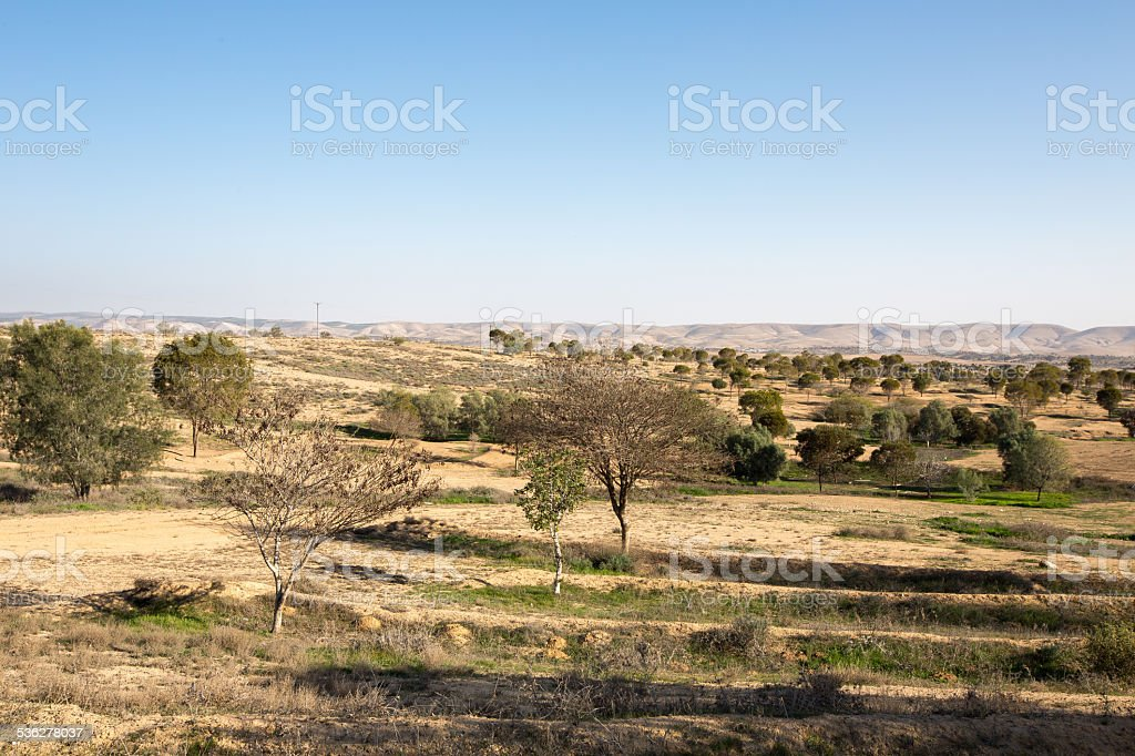 Feild near Metar, northen Ber-Sheva, Israel stock photo