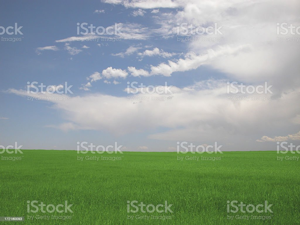 Feild of Dreams3 royalty-free stock photo