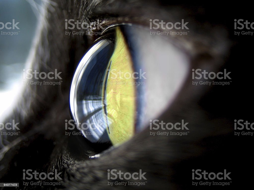 feline eye royalty-free stock photo