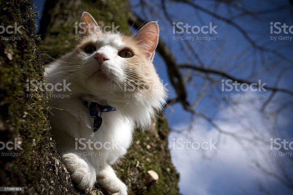 Feline Friend sitting in a tree stock photo
