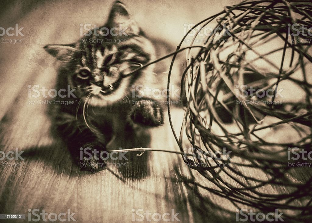 Feline Fun royalty-free stock photo