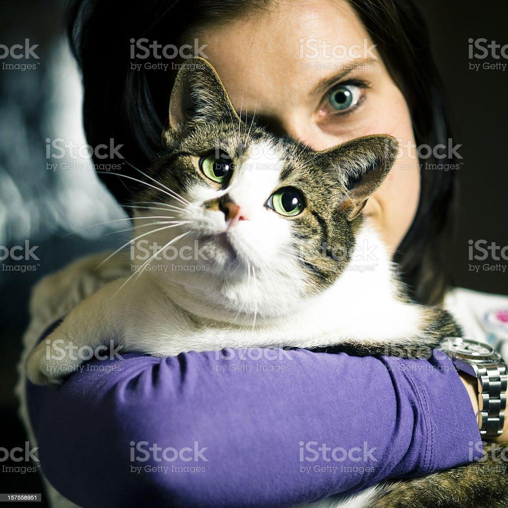 Feline Species stock photo