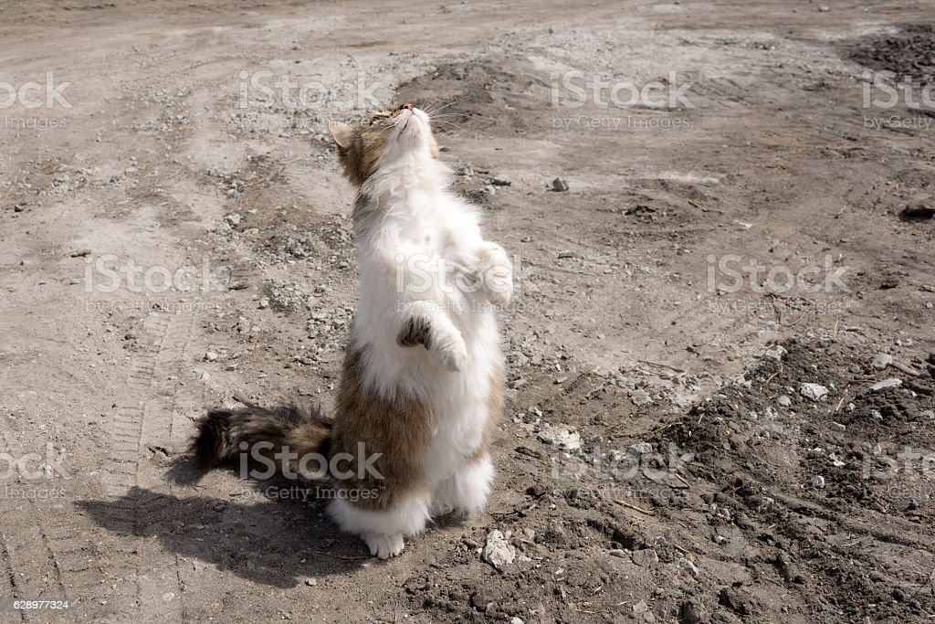 Felis silvestris catus waiting for food stock photo