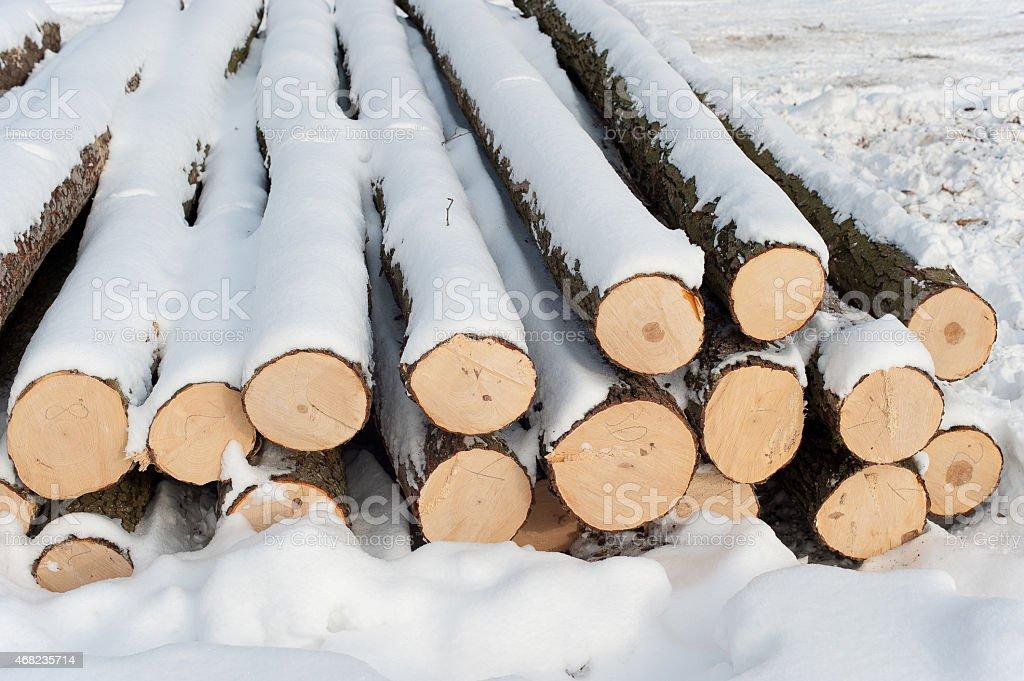 Bäume wurden gefällt forest Lizenzfreies stock-foto
