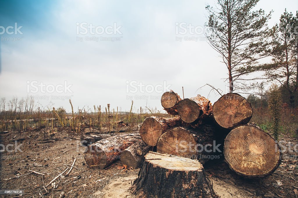 felled timber in the forest stock photo