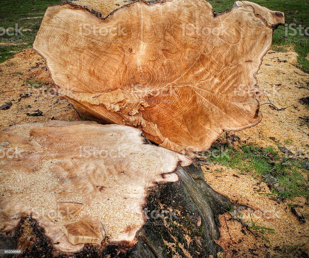 Felled tree detail royalty-free stock photo