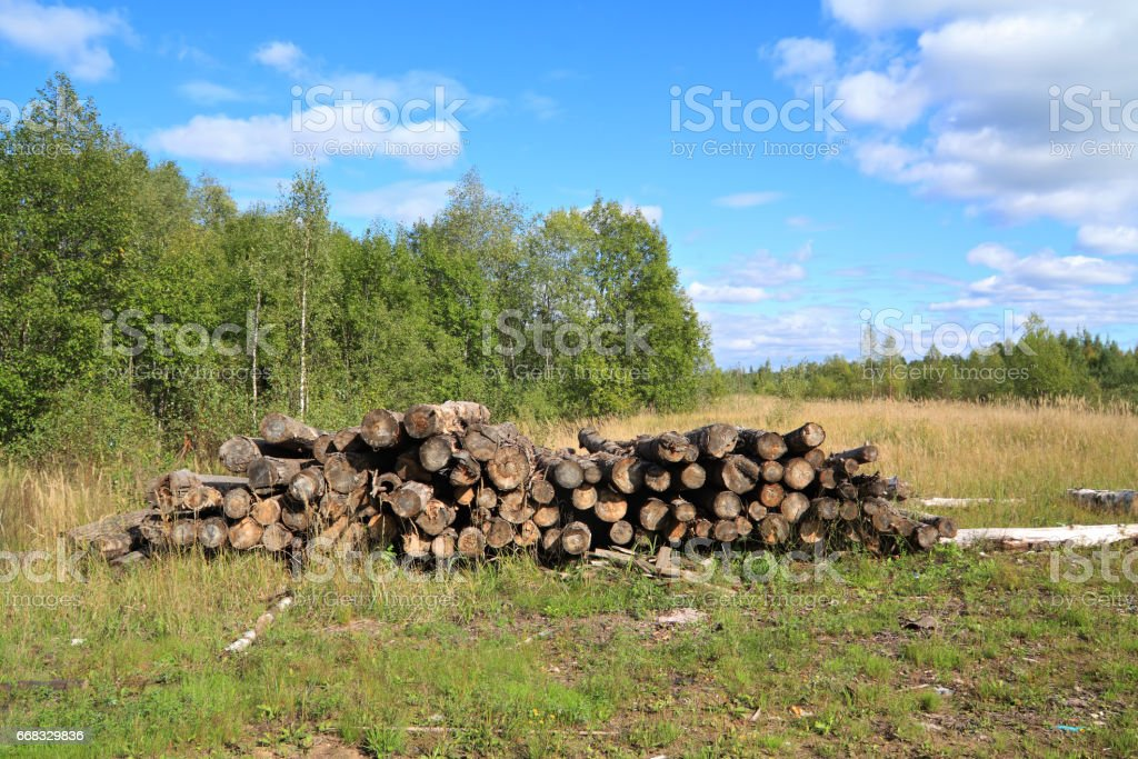 Felled trees business forest for construction stock photo