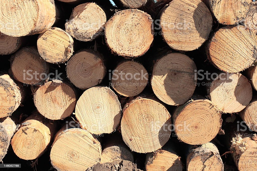 Felled trees royalty-free stock photo
