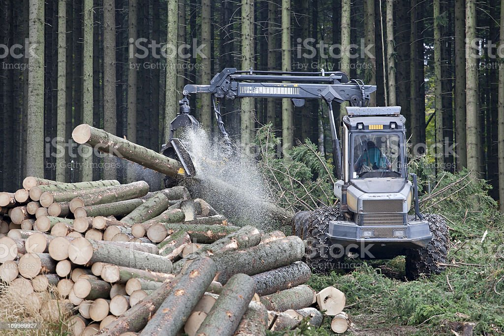 Feller buncher in forest royalty-free stock photo