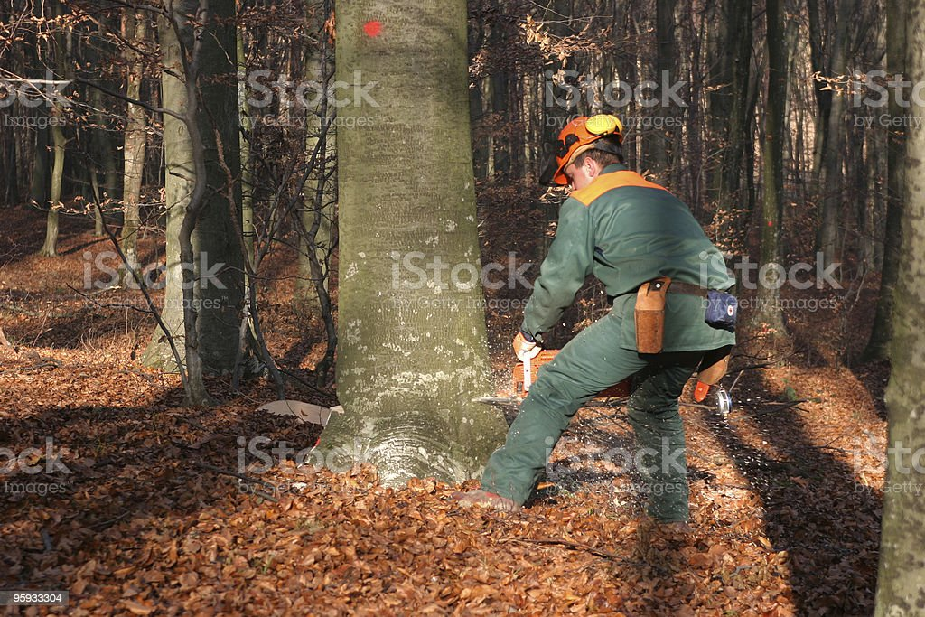 felling the tree royalty-free stock photo