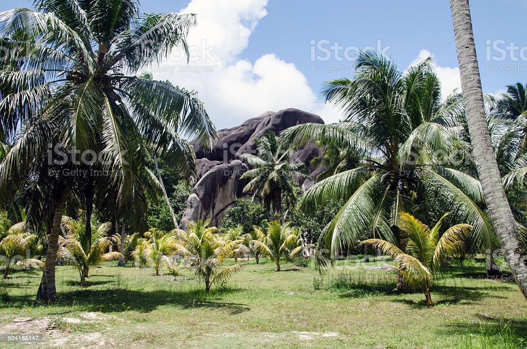 Felsen im Palmenhain stock photo