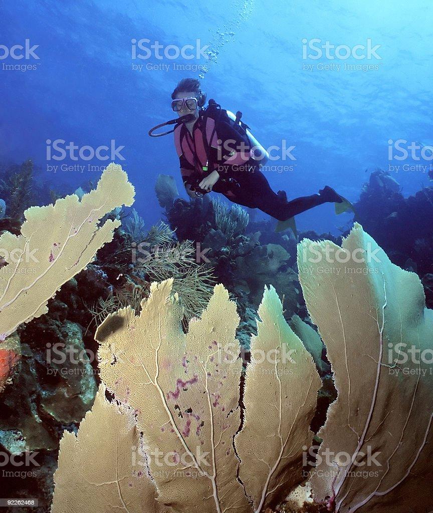 Femal plongeur et les Fans de mer photo libre de droits