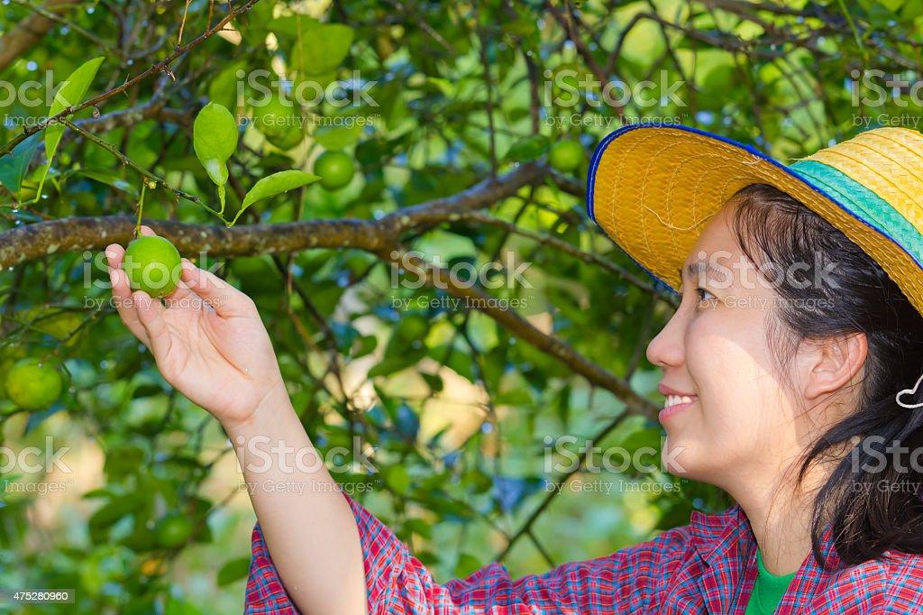 Female agriculturist hand holding fresh lemon stock photo