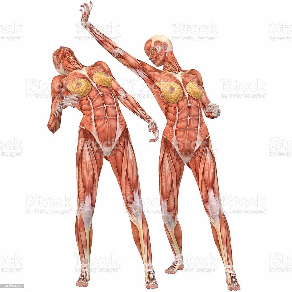 Женское тело видео анатомия фото 191-623