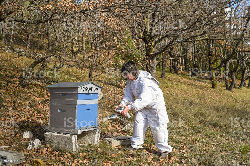 Female Beekeeper smoking her hive named 'Resolution' stock photo