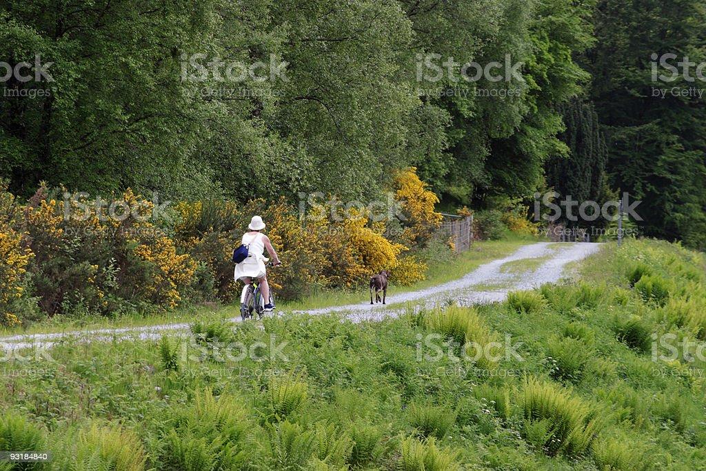 Female bicyclist stock photo