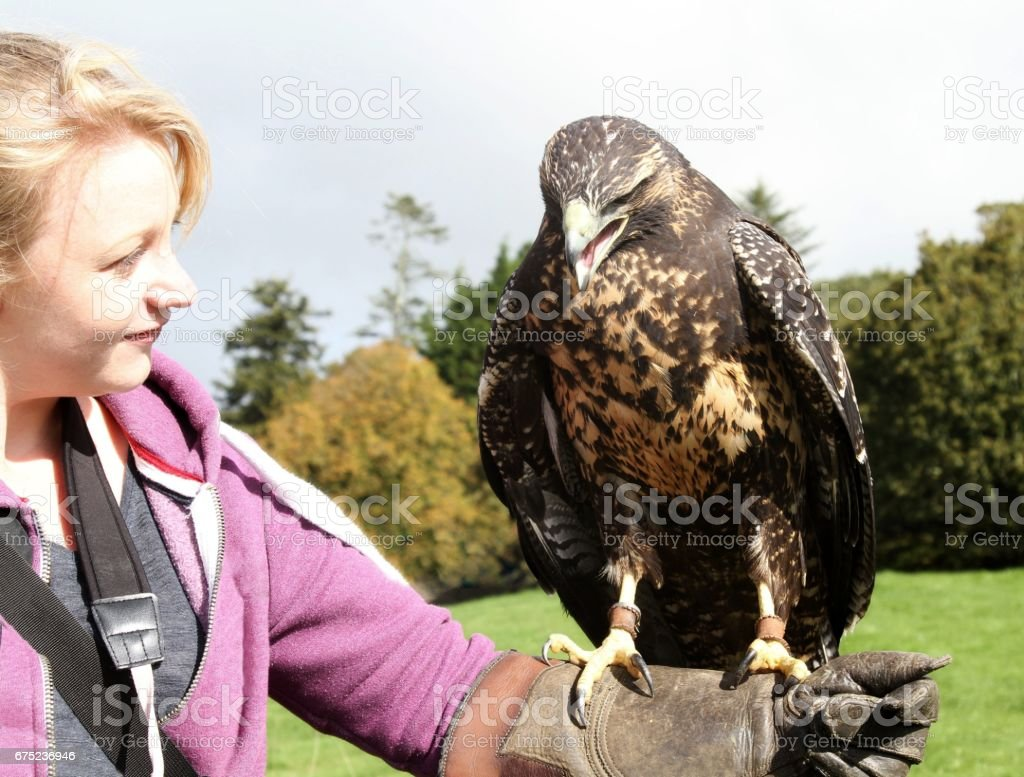 female bird handler and eagle stock photo