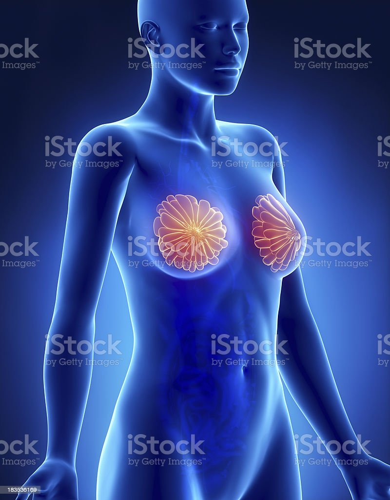 Female BREAST anatomy x-ray lateral view royalty-free stock photo