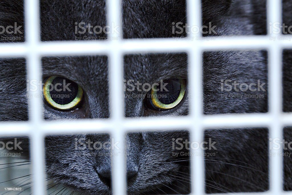 Female cat behind cage door watch grimly royalty-free stock photo