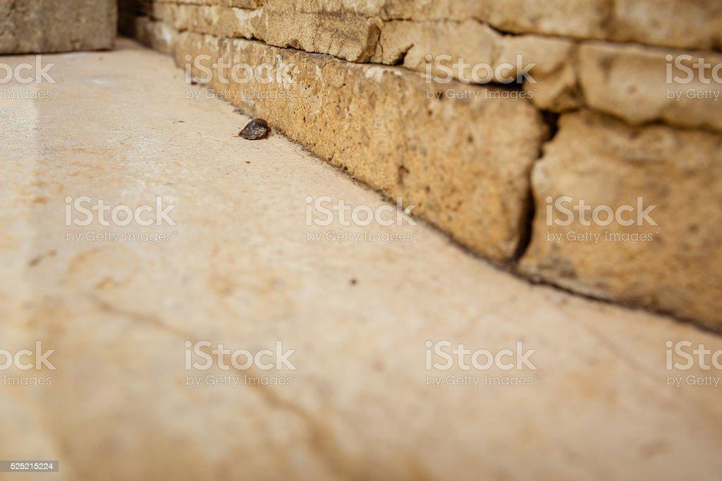 Female desert sand cockroach stock photo