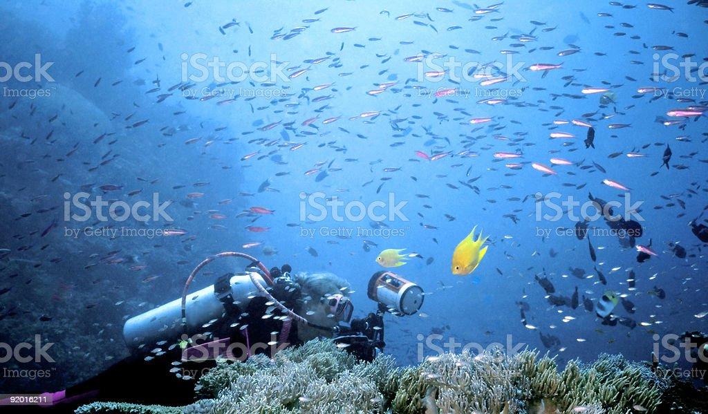 Femme de plongeur dans une tempête de poisson sous-marine photo libre de droits