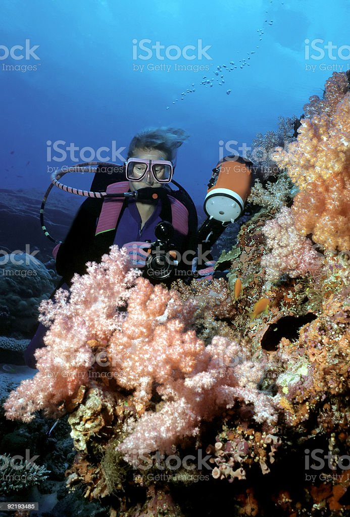 Female Diver viewing pink  Soft Corals royalty-free stock photo