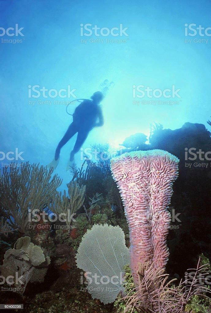 Femme de plongeur affichage Violet Éponge tube de fer photo libre de droits