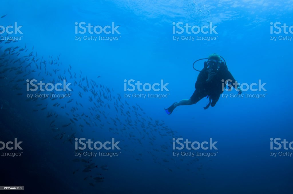 Female diver woman at the edge of a school of fish in the blue open ocean 2 stock photo