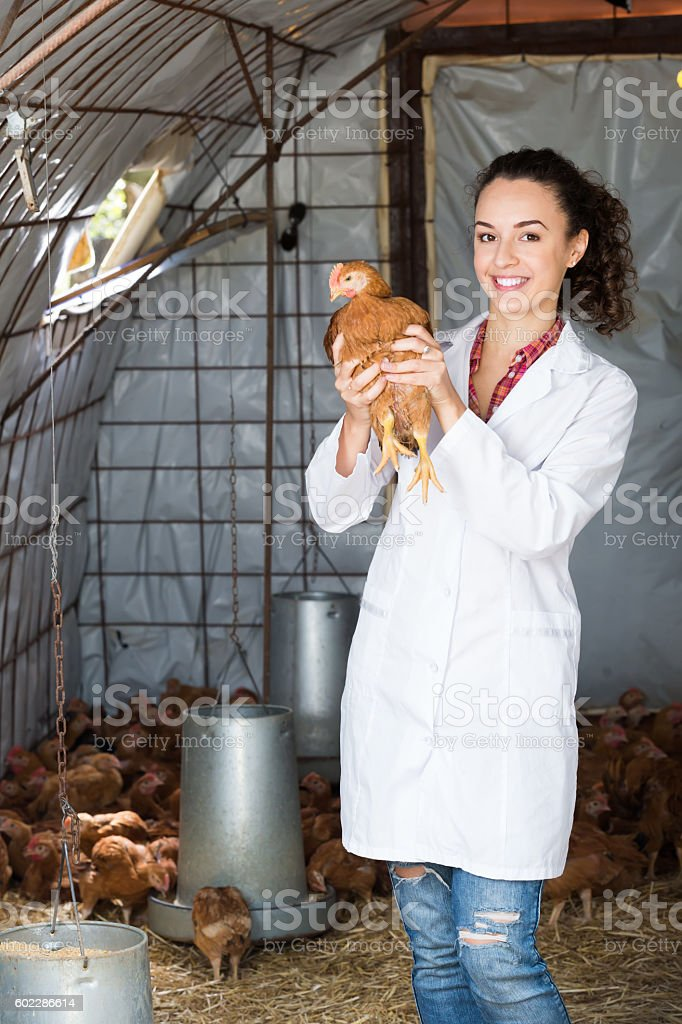 Female doctor in white coat holding chicken stock photo