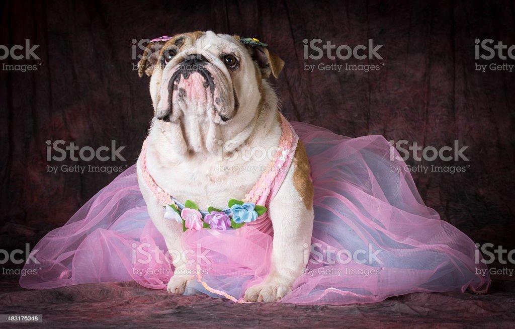 female dog stock photo