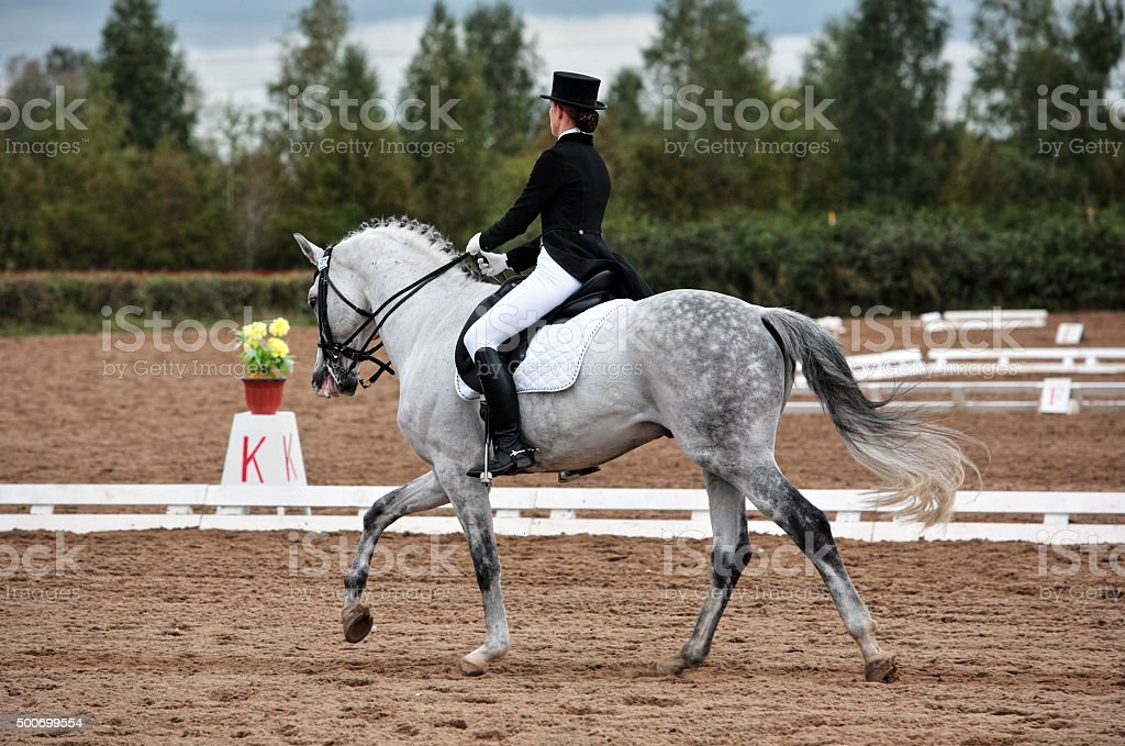 Female dressage rider exercising stock photo