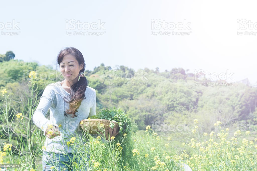 female entrepreneur picking organic herbs and vegetables stock photo