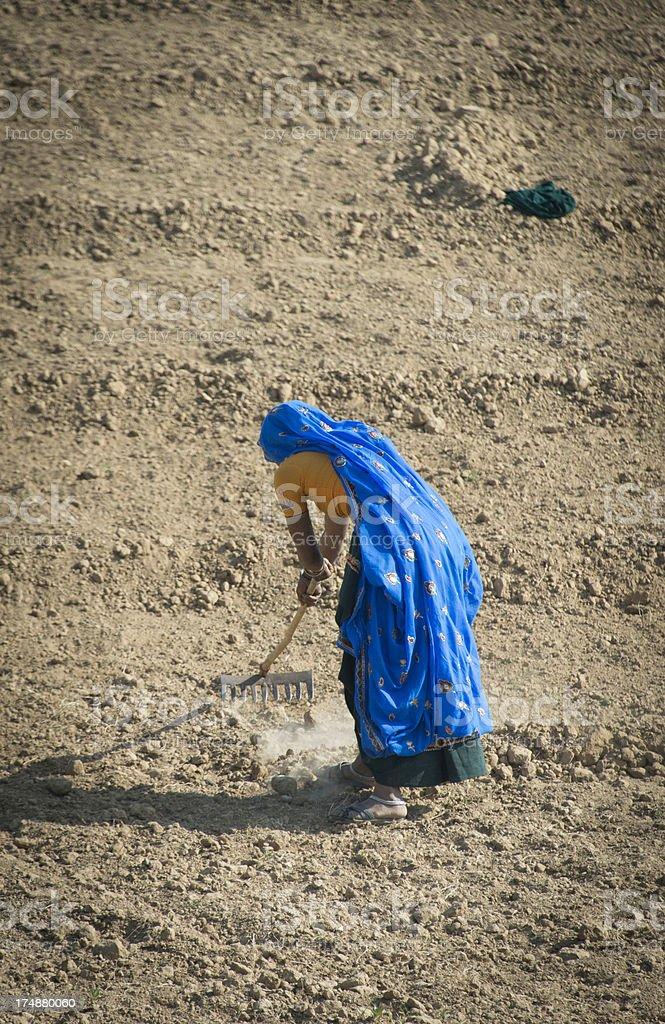 Female farm worker royalty-free stock photo