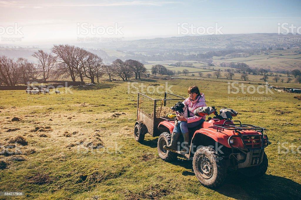 Female Farmer and Her Sheepdog stock photo
