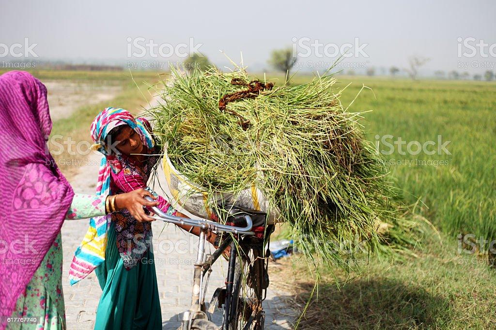 Female Farmer Working In The Field stock photo