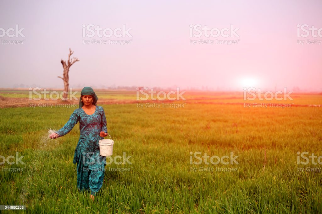 Female farmer working in the field stock photo