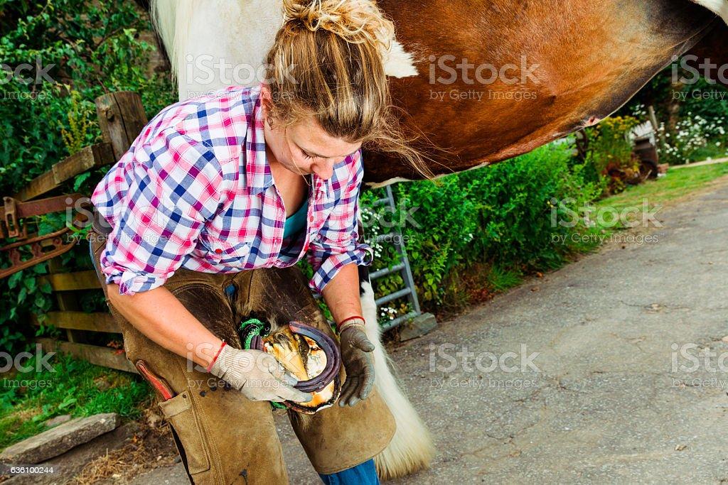 Female farrier fitting horseshoe to horse stock photo