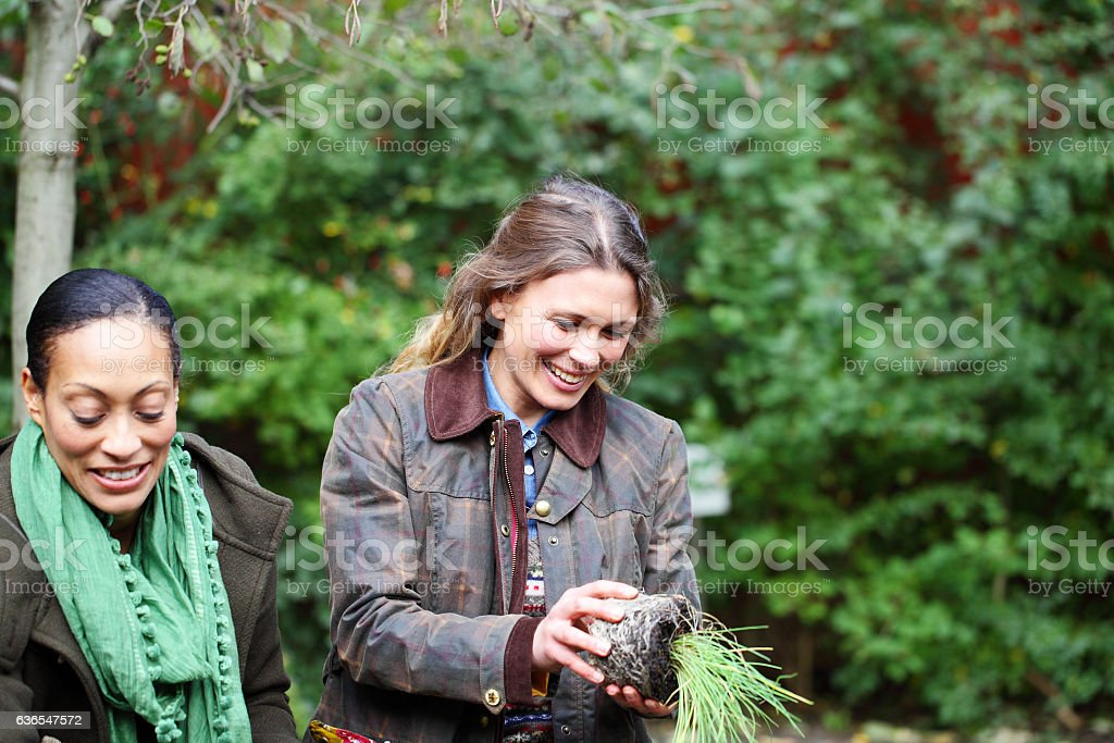female friends potting flowers in allotment stock photo