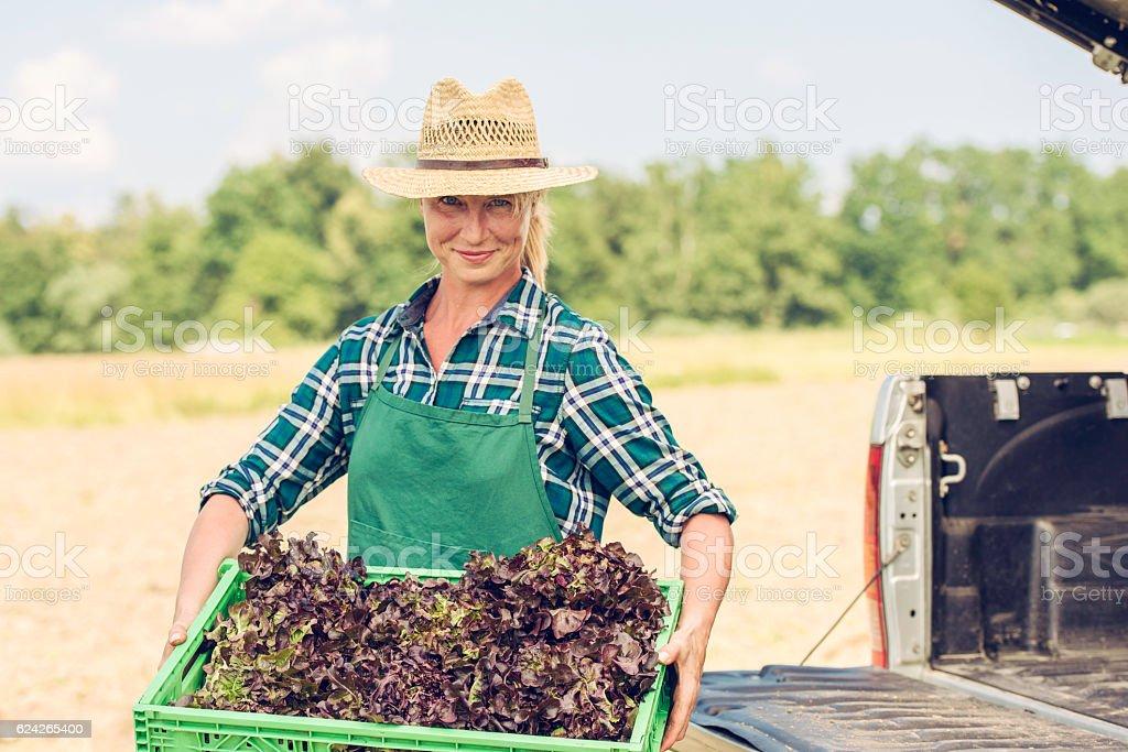 Female gardener holding box of fresh lettuce stock photo