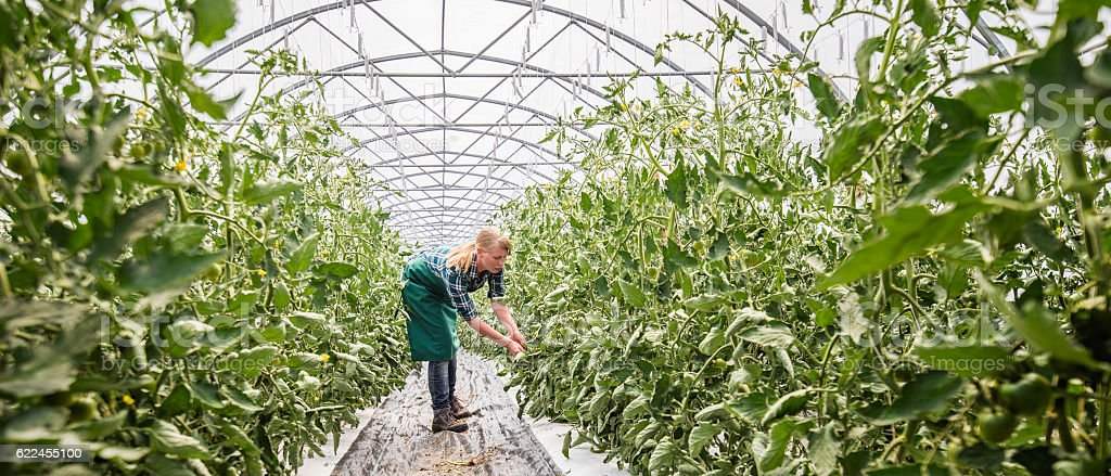 Female gardener in greenhouse stock photo