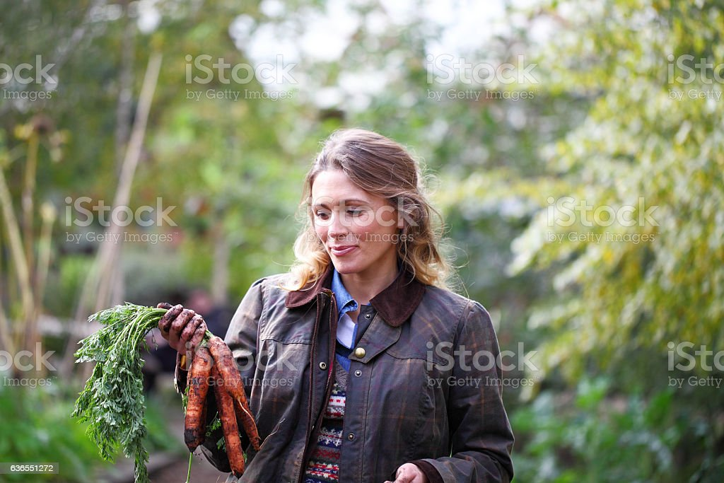 female gardener pulling up carrots stock photo