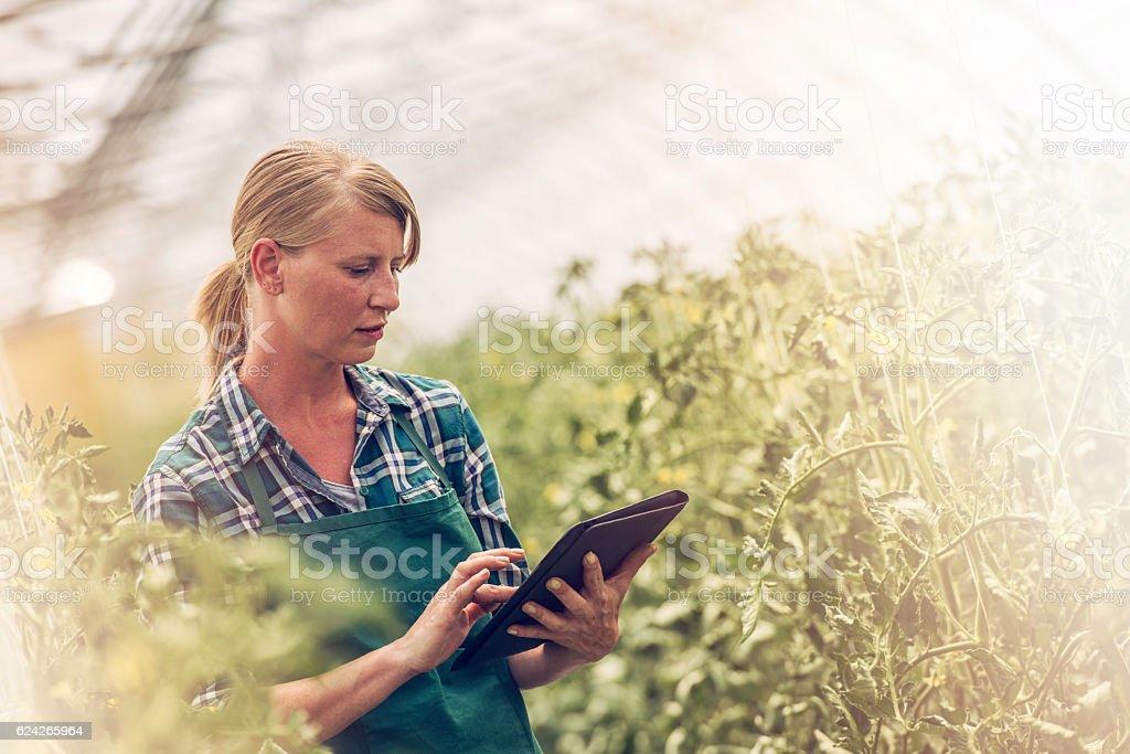 Female gardener with digital tablet stock photo